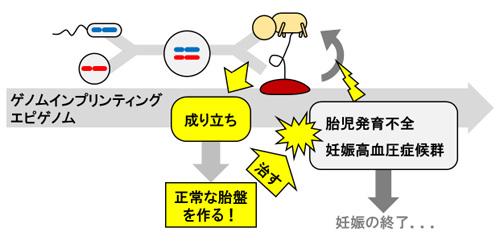 イン プリンティング ゲノム 核のリプログラミング 1